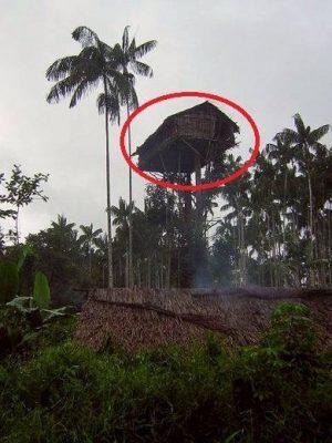 La tour B au plateau avant 2011, on y accédait avec des lianes..