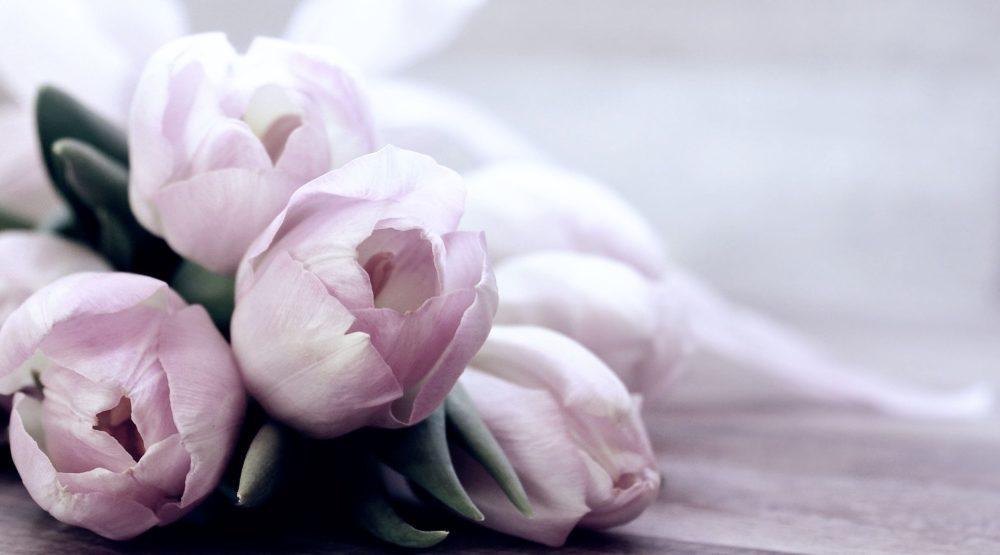 Des tulipes roses