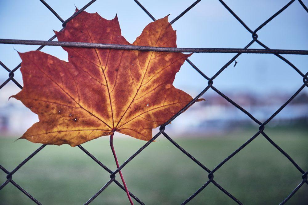 une feuille à l'automne qui symbolise le fait de lâcher prise