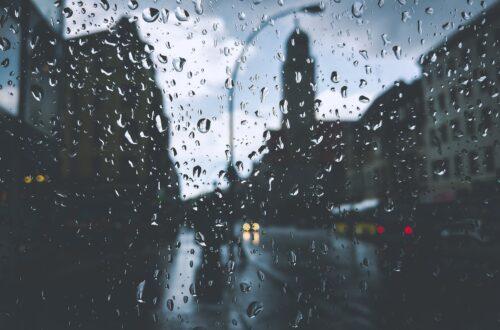 Article : A travers la fenêtre