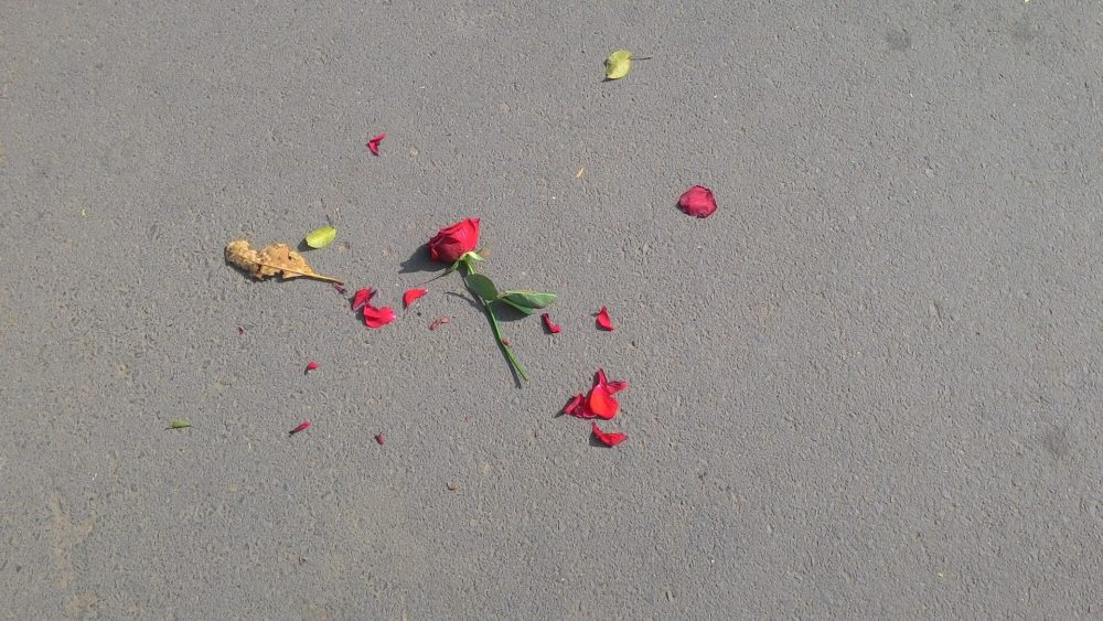 Une rose, jetée par Malick